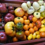 Tomates bio Thiéfosse Vosges
