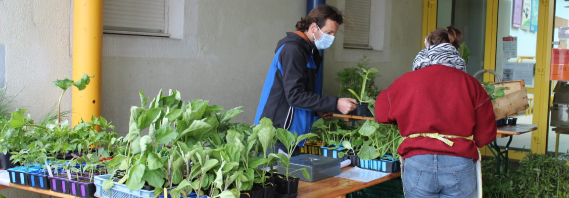 Bourse aux Plantes de Cornimont